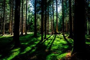 bosque privado en campamento de verano