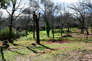 bosque-cercedilla-colladito