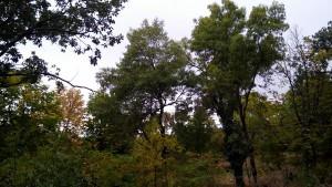 bosque-el-colladito-cercedilla